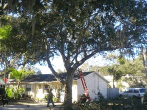 Tree service Safety Harbor